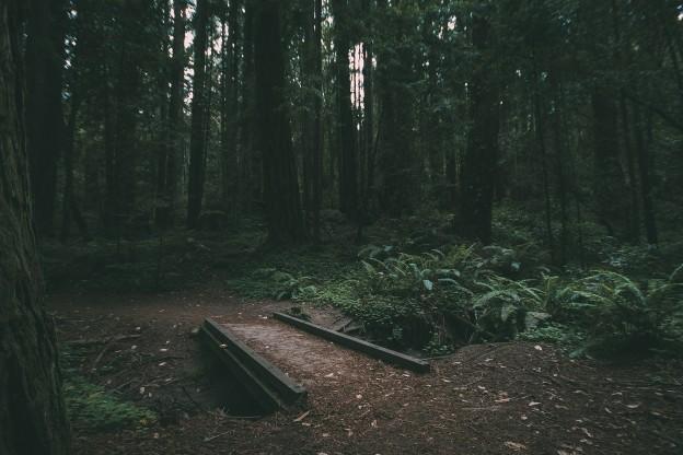nature-841424_1920.jpg